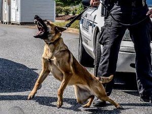 police k9 patrol dog training