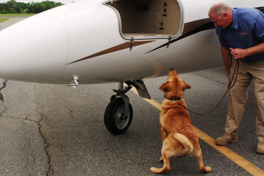 detection dog services
