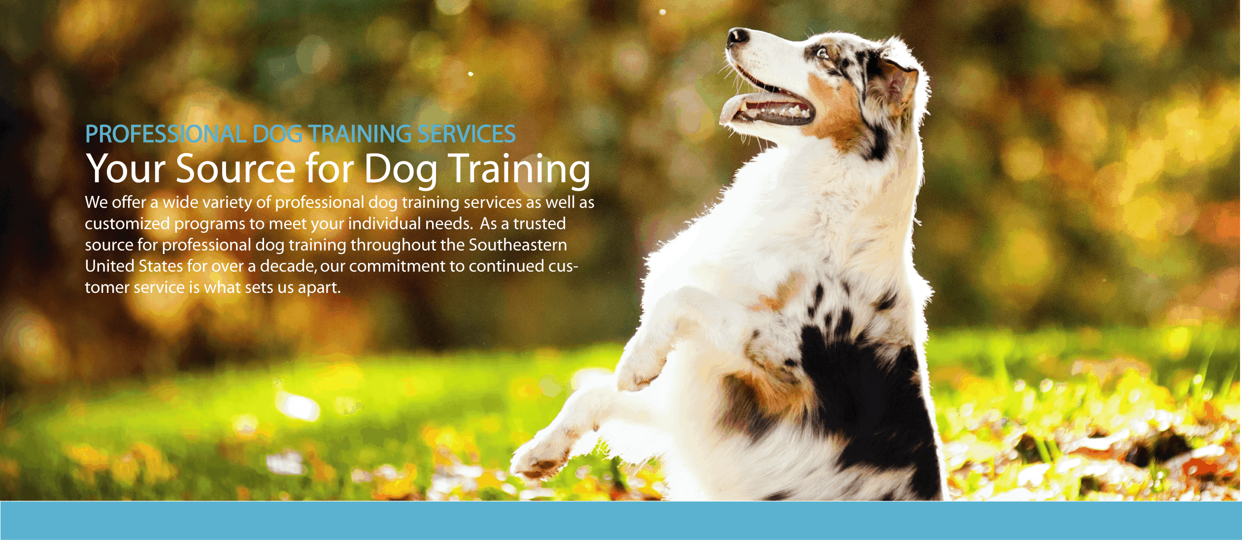 Dog-Training-services