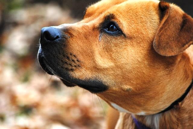 Send Away Dog Training