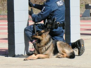 School for Dog trainers, police k9 instructor