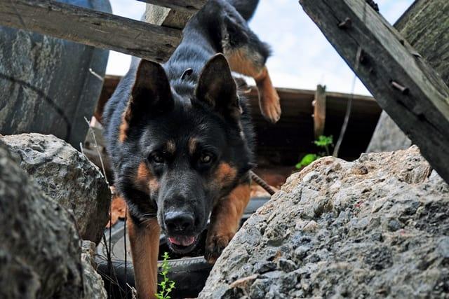 Service Dog Training In Birmingham Al