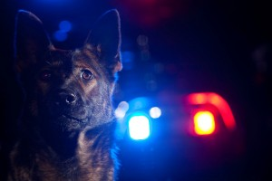 police k9 training, police dog training