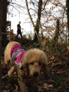 autism service dog trailing