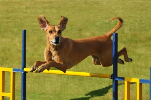 dog agility group class