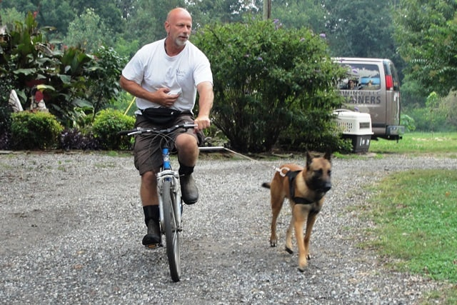 trainer biking with a malinois