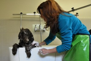 dog grooming suite