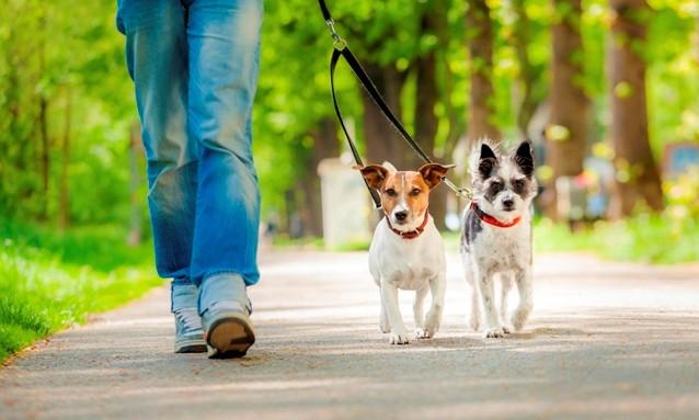 dog trainer jobs