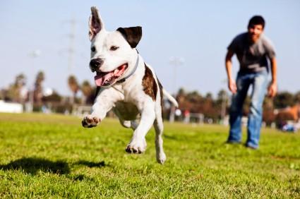 Dog training jobs