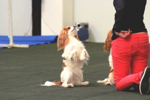 dog tricks group class