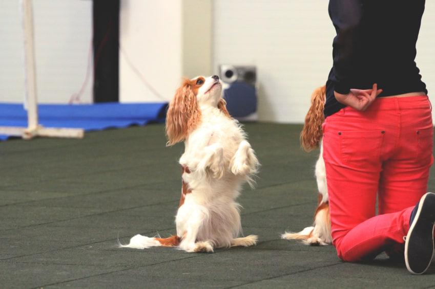 dog tricks group class
