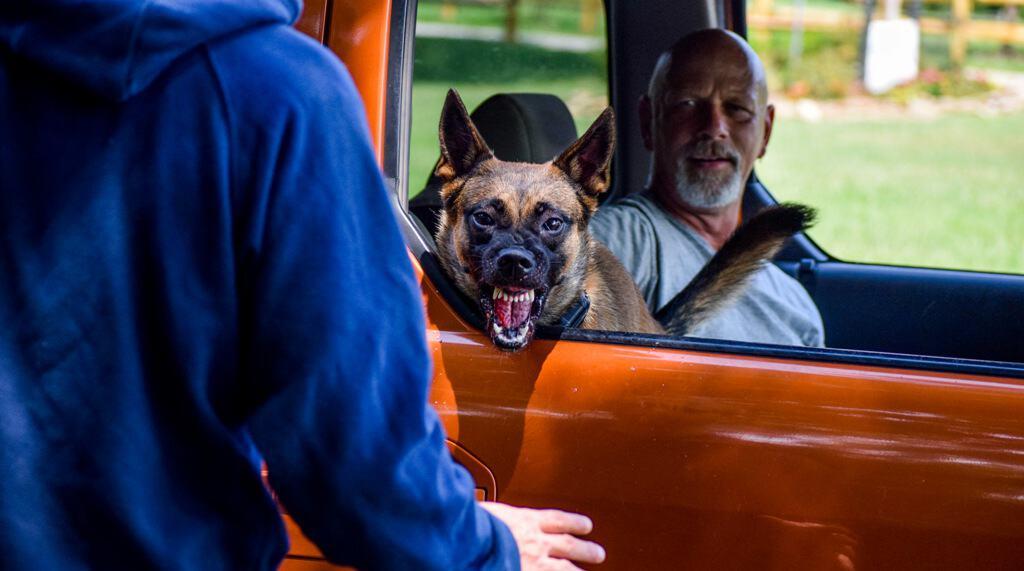 protection dog training nc