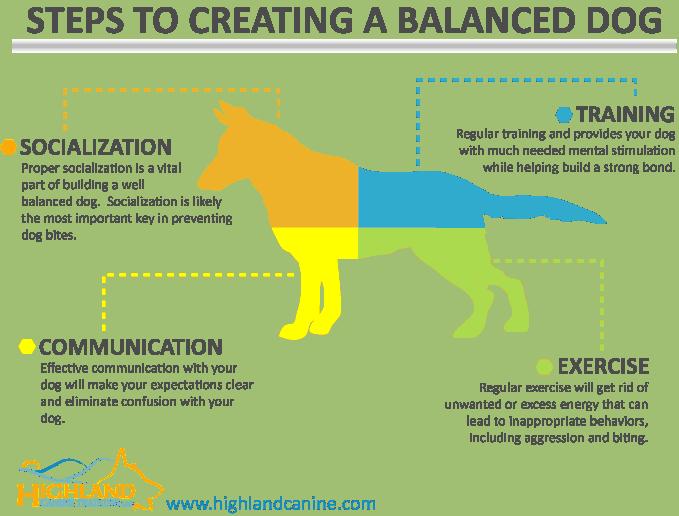 creating a well balanced dog
