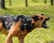 Dog Aggression Toward People