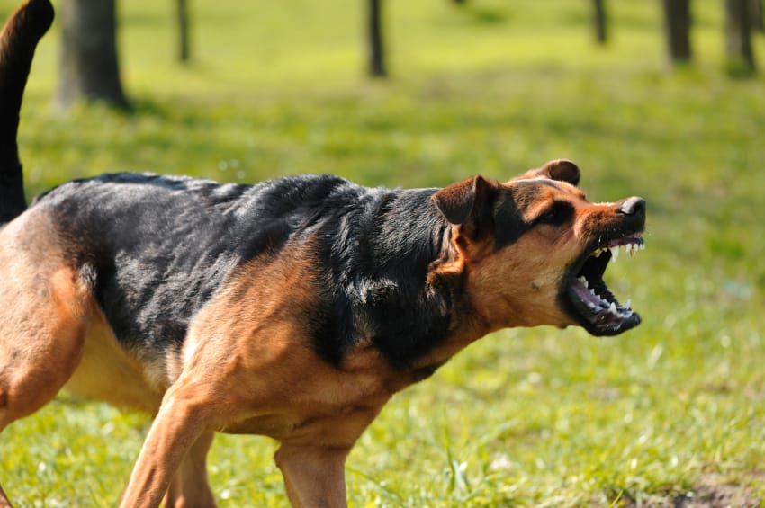 dog aggression toward people dog training police k9 With aggressive dog behaviour