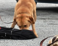Detection Dog Trainer Course