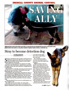 Saving Ally: Stray Gets a Second Chance