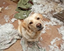 destructive dog behavior