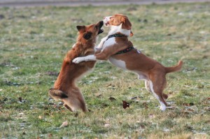 problem between dogs fighting