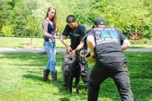 Licensed dog training school in NC
