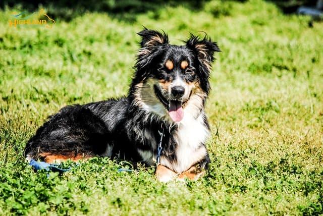 highland canine training behavior clinic