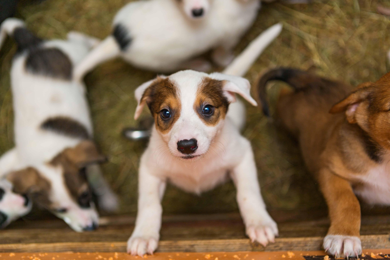 puppies looking up at the camera