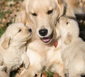 Early socialization leads to friendlier dogs