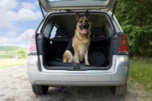 During long road trips, give your dog some time outside the car every few hours