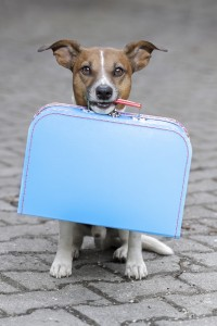 Be sure to pack your dog's necessities such as his regular food