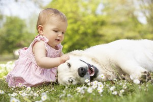 When children are involved, it is most important that dog and child are compatible
