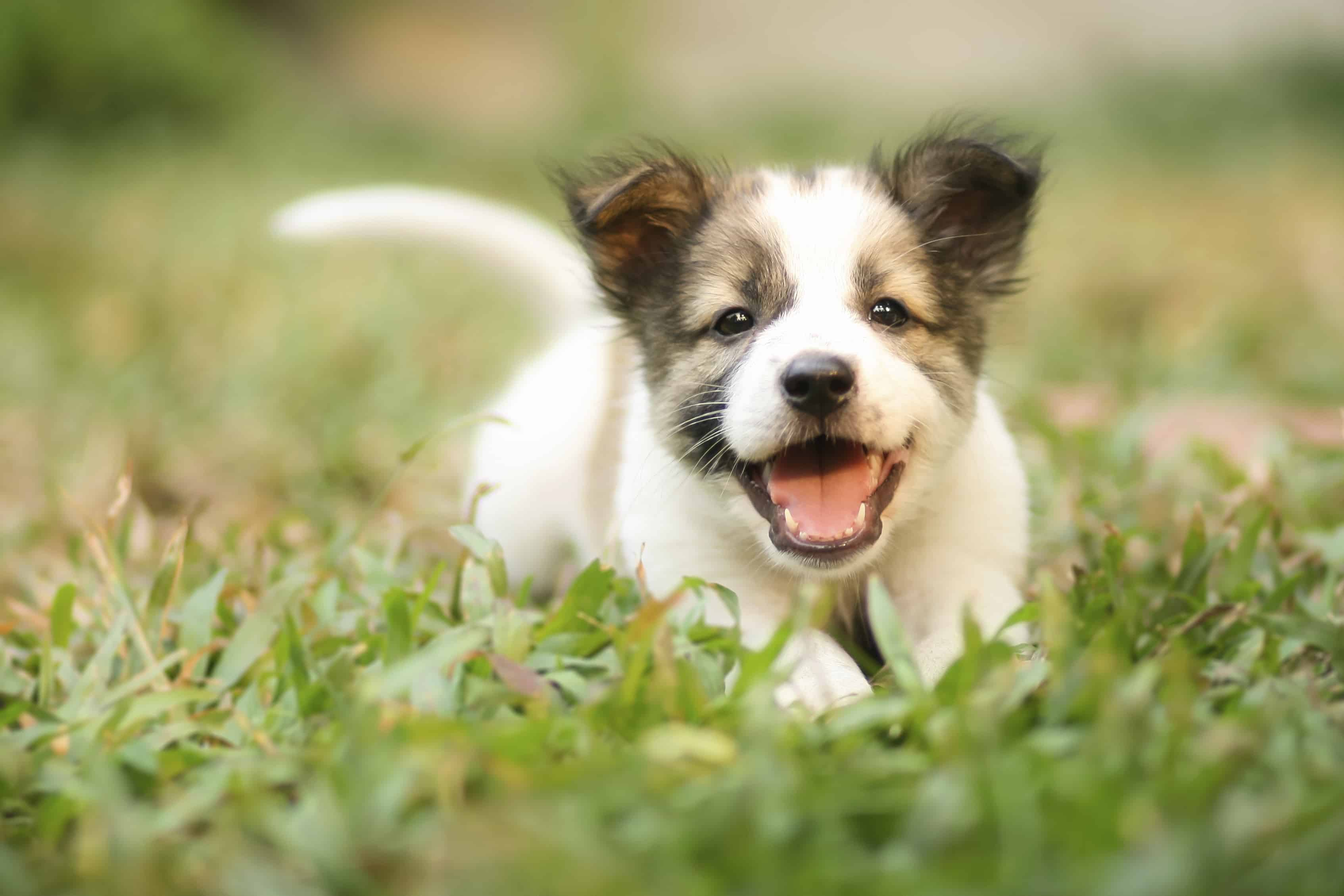 Consider every detail about a new puppy before bringing him home