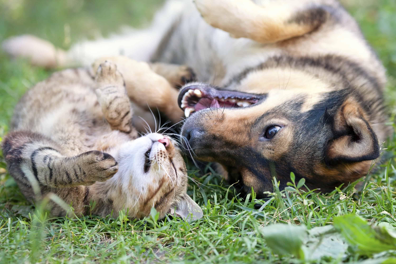 Earlier socialization leads to friendlier adult dogs