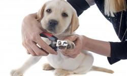 Foxfield Dog Training