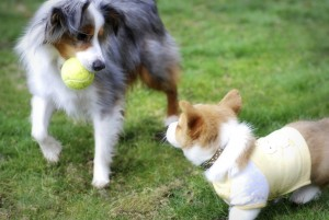 Socialize your puppy with socially appropriate dogs