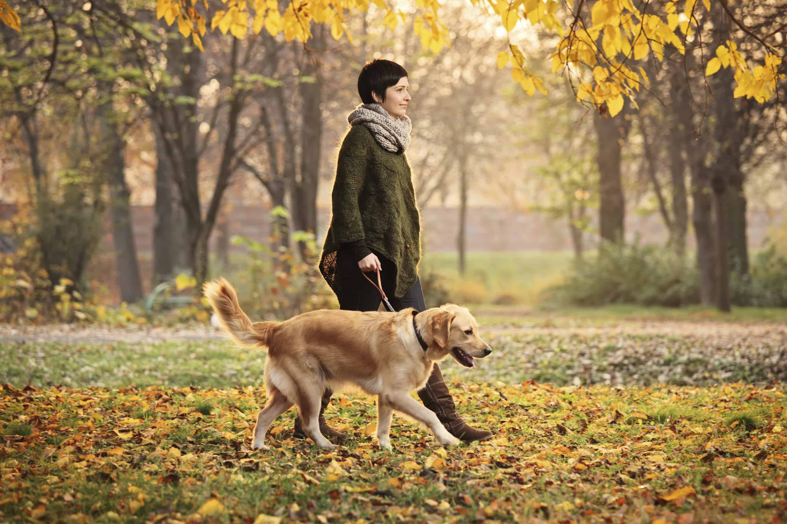 Signs your dog is learning to leash walk correctly