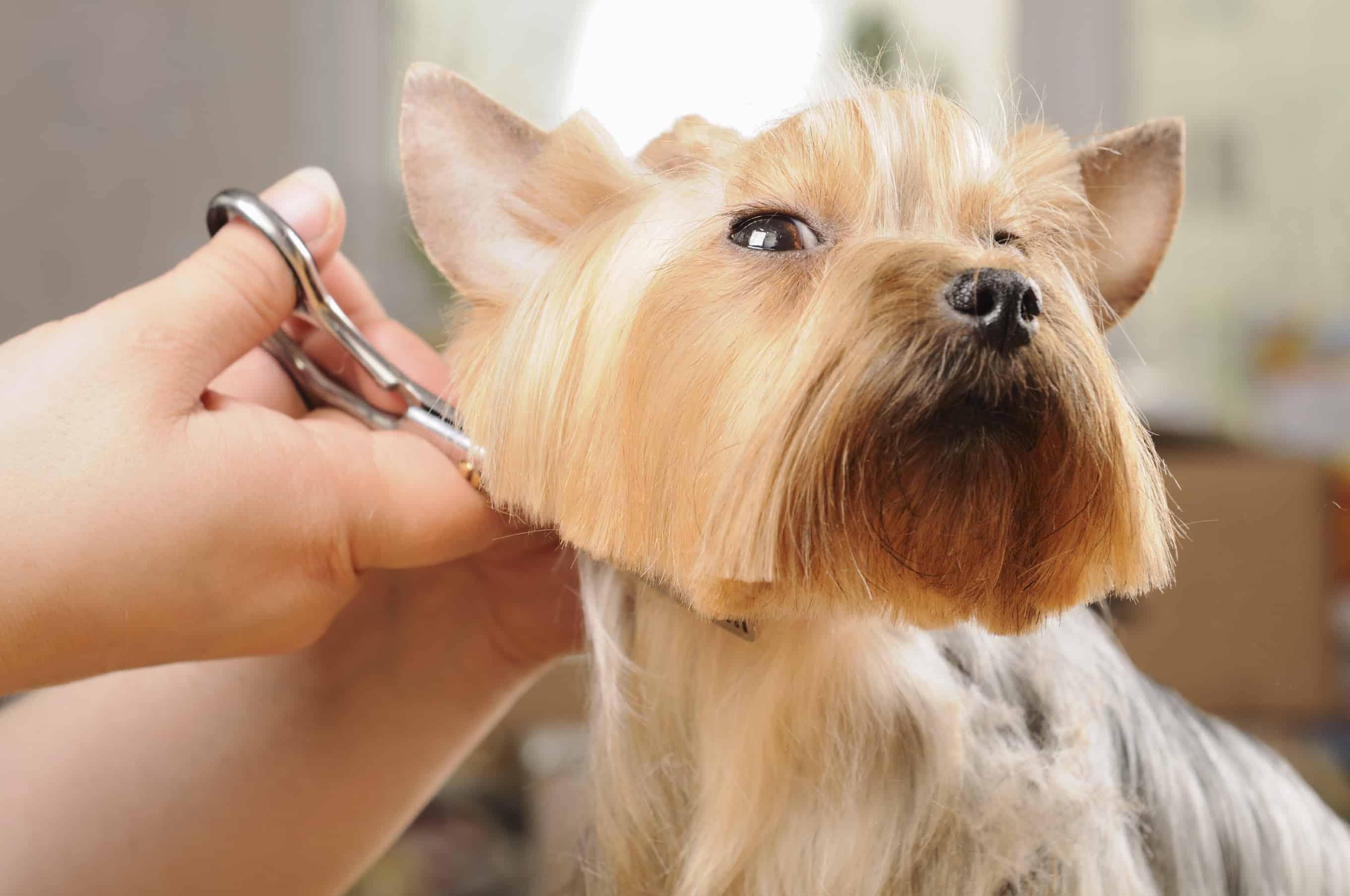 Tips to groom your dog properly