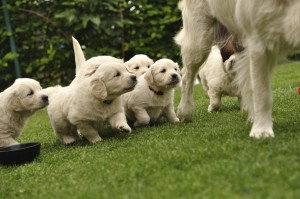 Try not to take puppies away from their mother and siblings too early