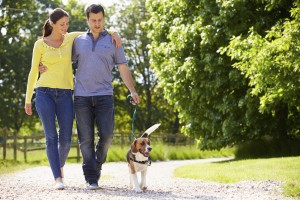 Pay attention to your dog during walks when leash training