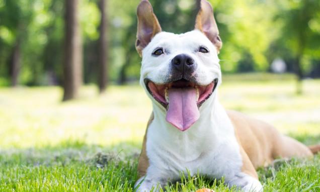 dog training services alabama