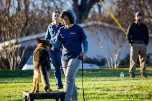 dog trainer school instructor