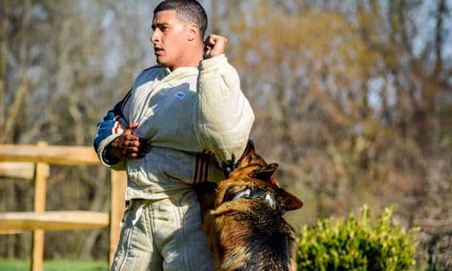 protection dog trainer school