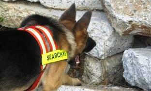 search rescue dog trainer school
