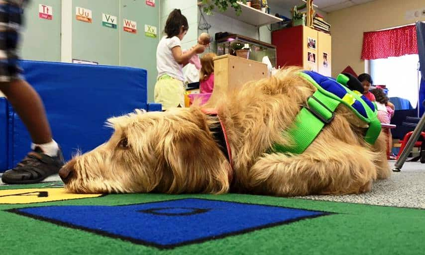 service dog trainer school