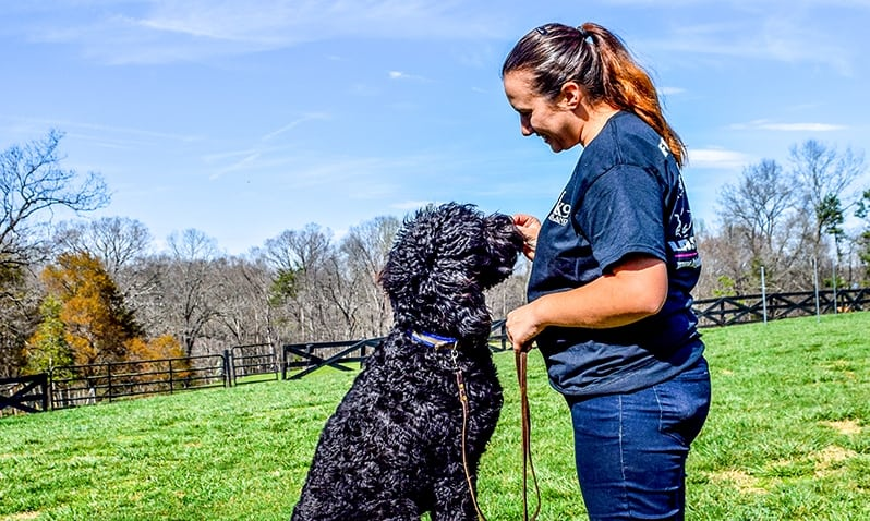 brittany horbert tampa florida dog trainer