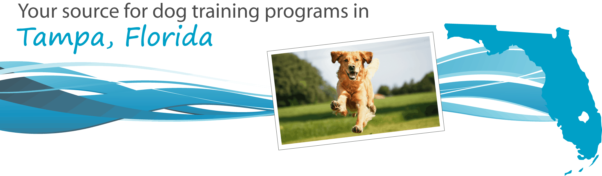 Dog Training Clearwater