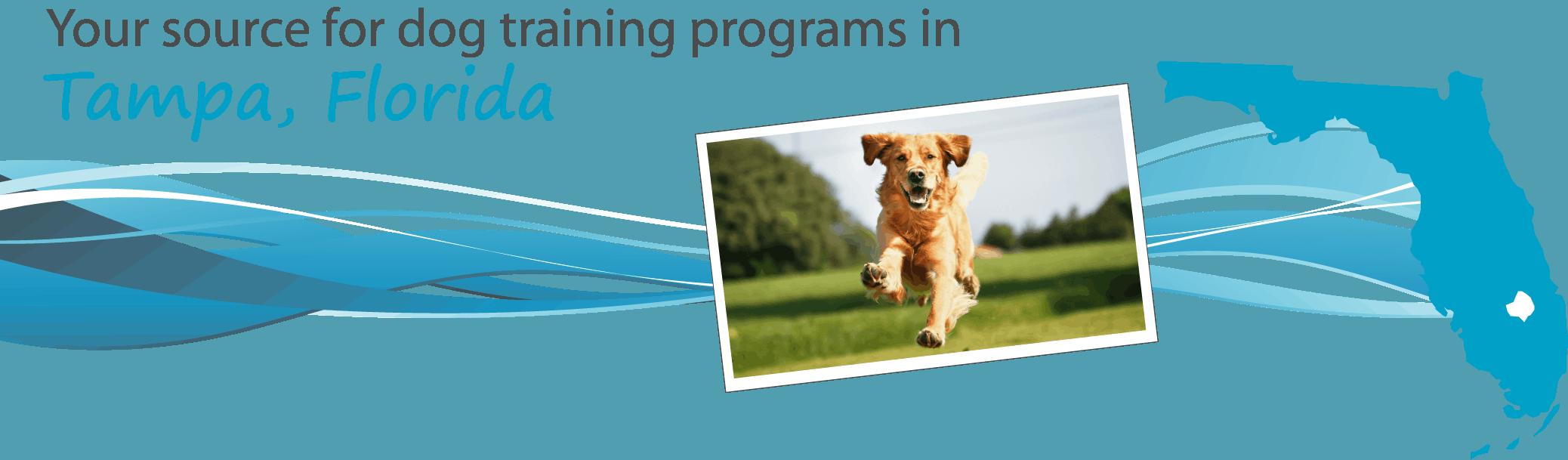 Dog-training-tampa-florida