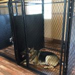in kennel dog training tampa florida