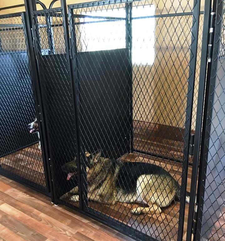 Dog Training, Tampa Florida | Highland Canine Training