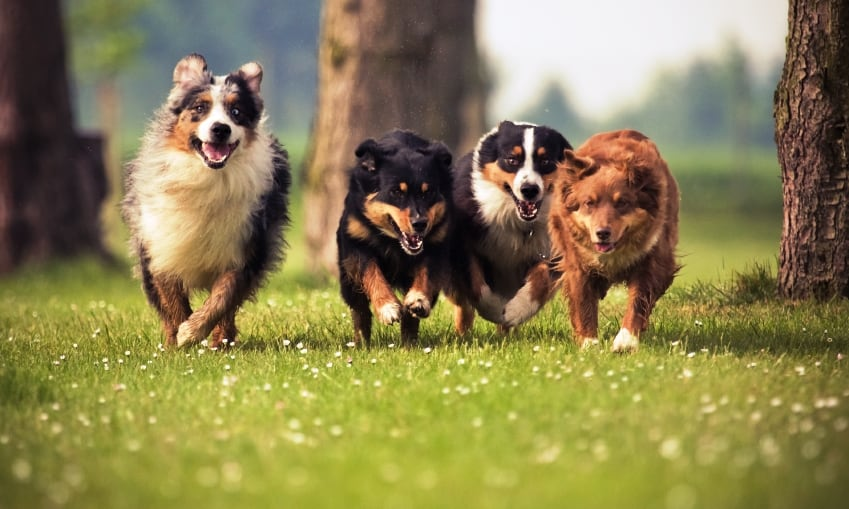 dog training services ws