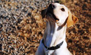expert dog training programs